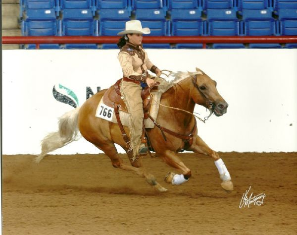 Quarter Horses for Sale, Paint Horses, Reining Horses for ...